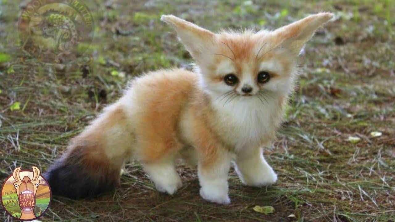 Blog animaux : pour quelles raisons offrir un collier à son chat ?